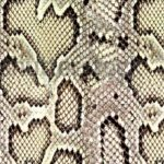 Snake Pattern